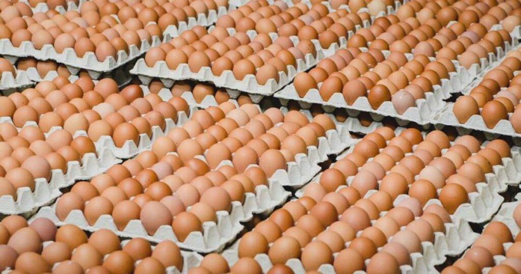 Подорожчання яєць — через тиск НАБУ на агрохолдинг «Авангард»