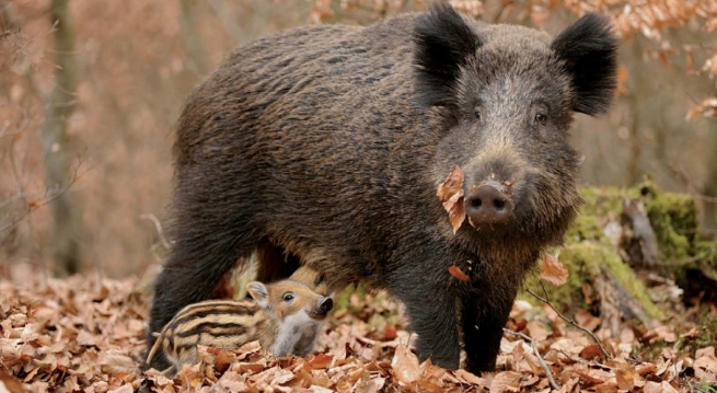 На Дніпропетровщині перерахували диких тварин