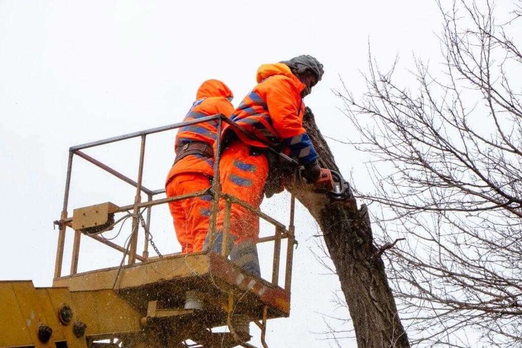 У Дніпрі обрізають і видаляють аварійні дерева по вул. Мандриківській