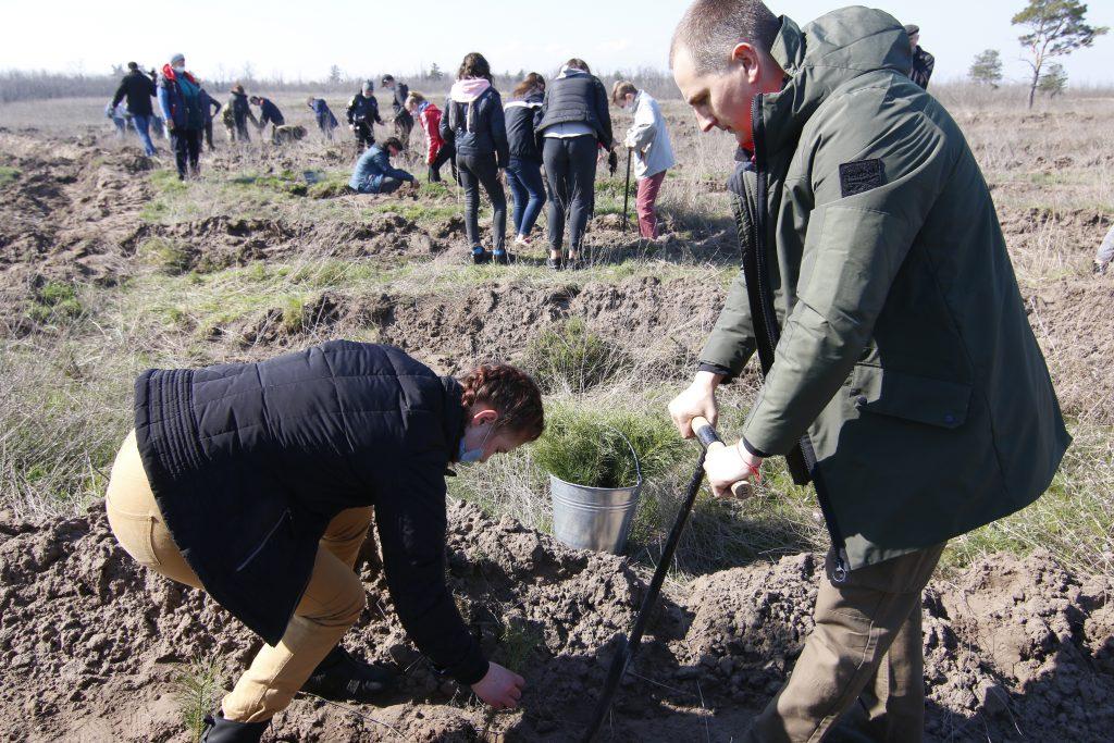 Майже мільйон дерев за добу висадили на Дніпропетровщині