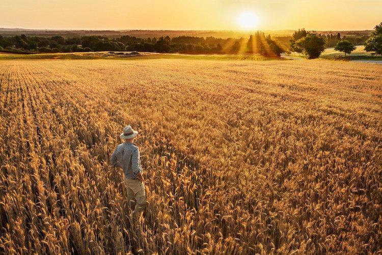 Дніпропетровщина очолює всеукраїнський рейтинг виробників сільського господарства