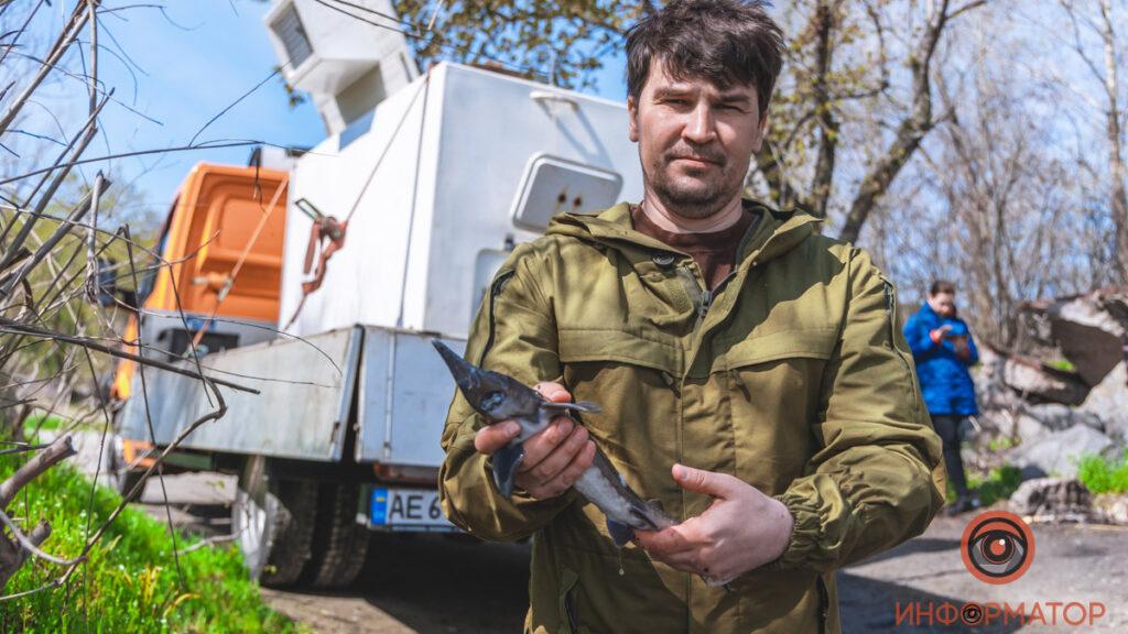 Максим Голосний: чиновники невдоволені зарибненням Дніпра осетром