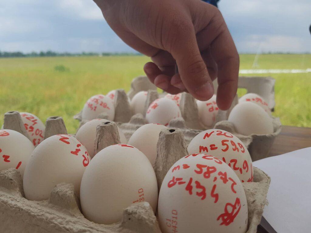 У Дніпрі запускатимуть моделі ракет з вантажем у вигляді сирих курячих яєць