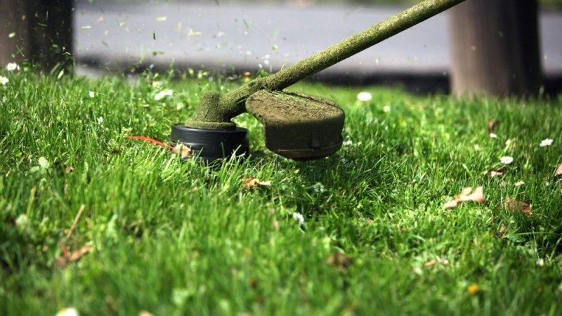 «Трава у дома». «Екологія – Д» нахабно нав'язує  послугу, знищуючи траву дощенту на зло її захисникам