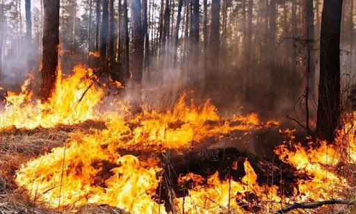 На Дніпропетровщині будуть протидіяти пожежам в екосистемах